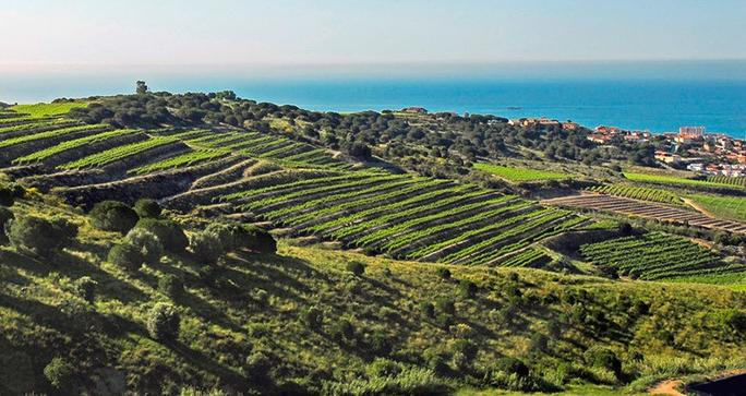 View of the Mediterranean sea from Alella Vinicola vineyards